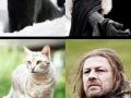 Cat Of Thrones