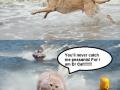 Dog Fort vs Dr Cat