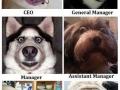 Dog Management