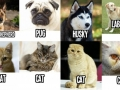 How I view cats and dogs