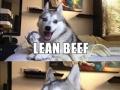 Huskies and cows