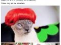 Selling cat wigs