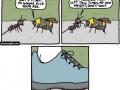 Ant Vs Bee