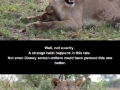 Lioness killed a baboon