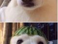 Fruit pets