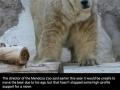 World's saddest animal