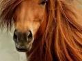 Diva horse