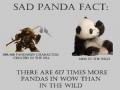 Panda 101