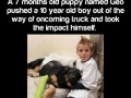 Real life super dog!