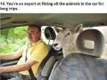 Animal lovers are strange