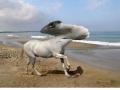 WTF Animal Hybrids