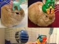 Vinnie, the balancing rabbit