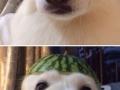 Melon collie and sour puss
