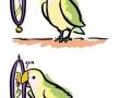 Self-loving parrot