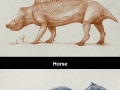 Shrink-wrapped animals