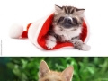 Sloth faces on kittens