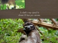 Stuff about sloths