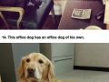 Every office should have a dog