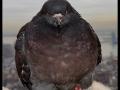 Bad a** pigeons be like