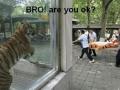 Tiger bro love