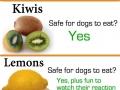 Can your dog eat fruits?
