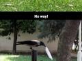 Good Guy Crow