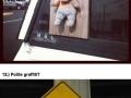 Literal sightings