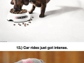 Clever ads using animals