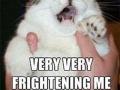 Bohemian Rhapsody meme