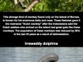 Rare & unknown animals