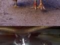 Animals & their minis