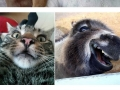 Animals posing for selfies
