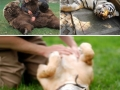 Animals enjoying belly rubs