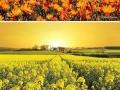 Beautiful flower heavens