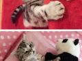 Saddest cat on the internet