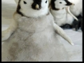 Being a penguin