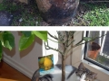 Cats in plant pots