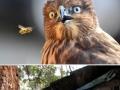 Astonished animals