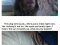 Dogs know how you feel