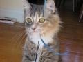 Sad kitten is sad