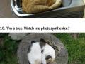 Super cosy cats