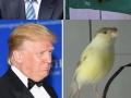 Donald Trump lookalikes