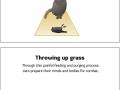 How to spot a killer cat