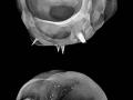 Photos of nuclear bombs