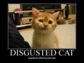 Disgusted cat