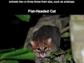 Unusual cat species