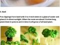 Vegetables that regrow