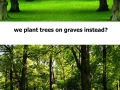 Plant trees on graves