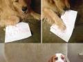 Dogs shamed