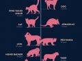 Lifespan of animals